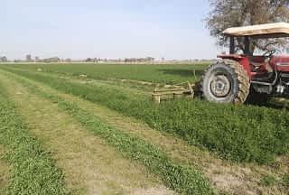 فروش ۵۵ هکتار زمین کشاورزی دامداری قزوین محدوده ای خاکعلی