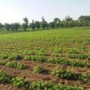 فروش ۵ هکتار زمین کشاورزی نظراباد هشتگرد البرز
