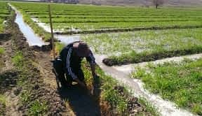 فروش ۳ هکتار و شش هزار متر زمین کشاورزی بسیار عالی نظرابادهشتگرد البرز